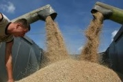 USAID, UNDP help reduce barriers to Kazakh wheat export to Afghanistan