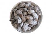 Salted apricot kernels Uzbekistan's most expensive agricultural export item