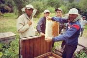 Kyrgyz beekeepers start breeding pedigreed bees