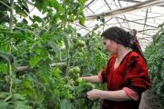Uzbekistan: OSCE supports study visit of women farmers to the Netherlands